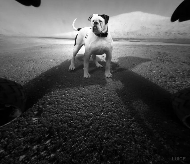 Curiosity-Life-On-Mars-Photos-Dog